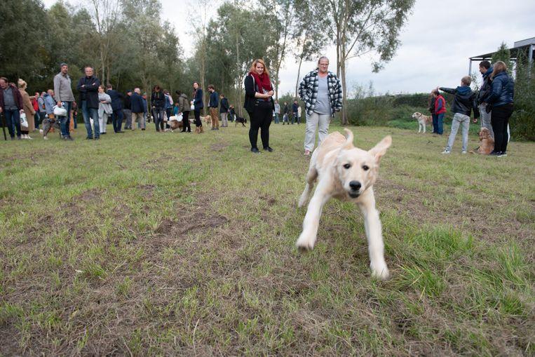 Op dit terrein aan de Coupure kunnen honden even de pootjes strekken.