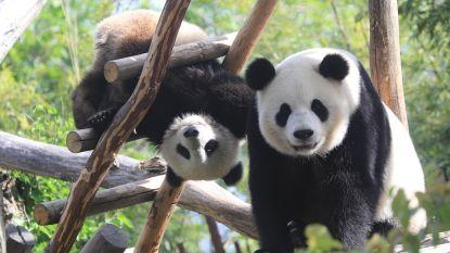 Babyboom in de dierentuinen: waarom vinden we babydieren nu juist zo schattig?