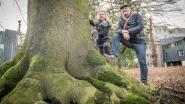 30 bezwaren tegen bomenkap voor nieuw ACV-gebouw