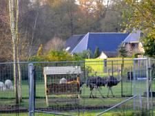 Oldenzaal moet opnieuw aan het werk voor vergunning dierenweide