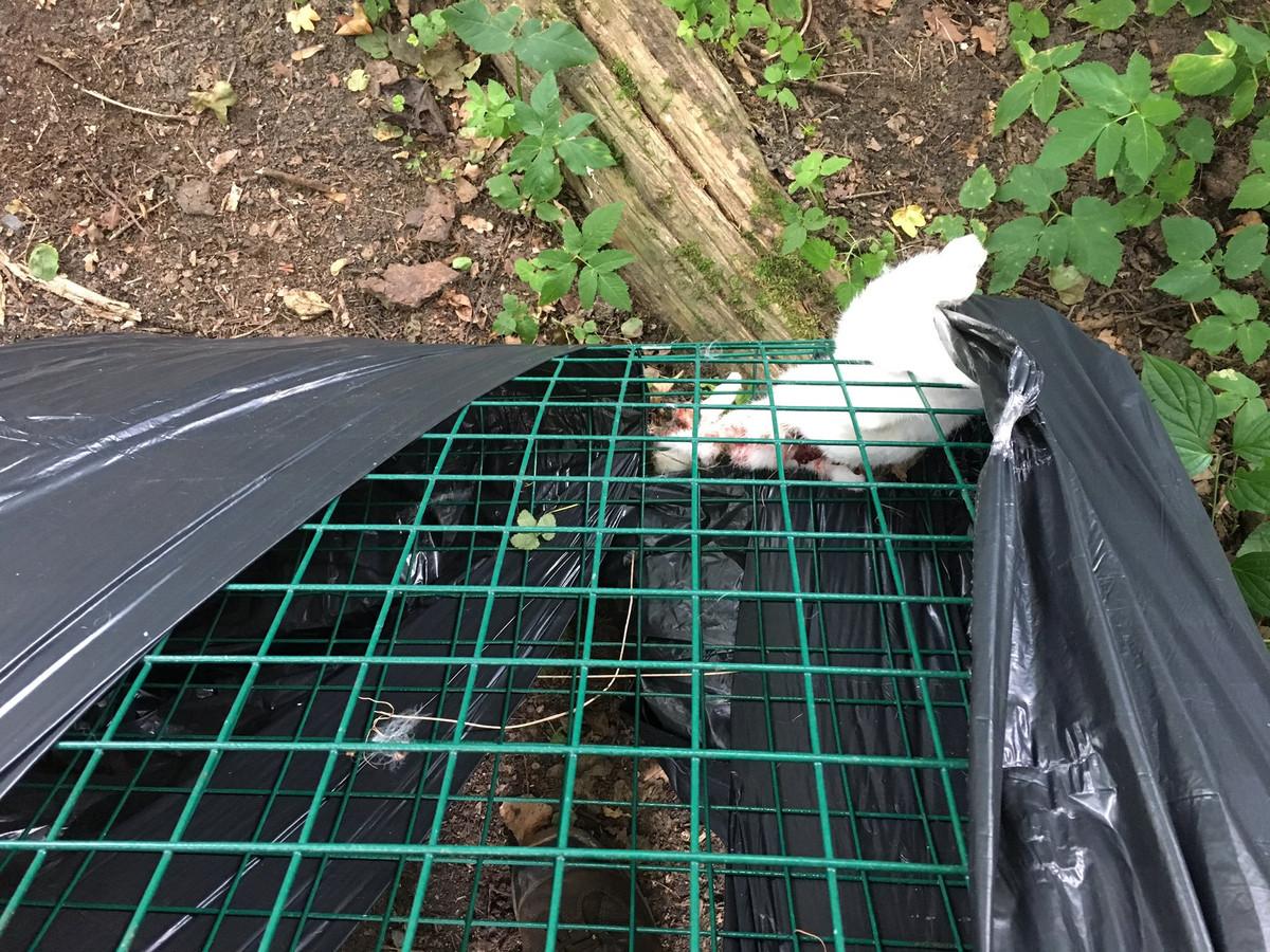 Het konijntje was in een zelf-gefabriceerde kooi in het Kralingse Bos achtergelaten.