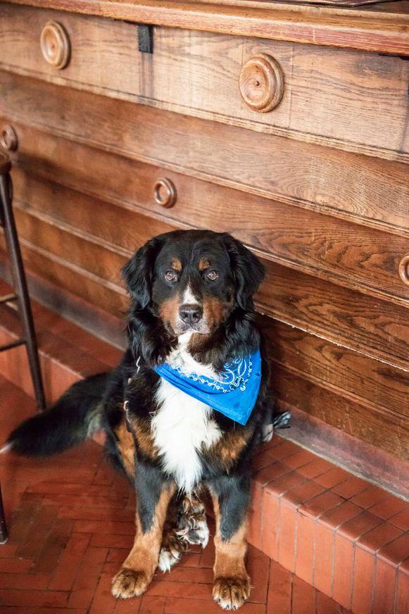Zelfs een hond van een klant in café Meng in Genk supportert mee.