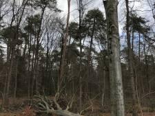 Bomen langs N319 bij Vordens landgoed De Wiersse worden met spoed gekapt
