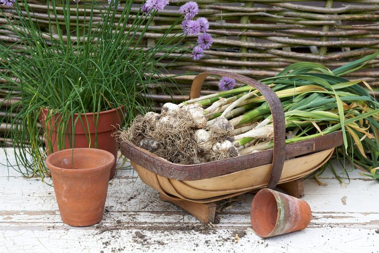 In graafschap Sussex wordt nog op traditionele wijze manden gemaakt, de zogenaamde 'truggery'.  Beeld Alamy