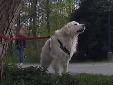 Un chien abandonné par son maître à cause du coronavirus: comment réagiriez-vous?