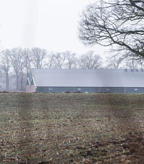 'Geen bedenkingen' tegen nieuwe megastal in Geesteren, ook al zou het simpel beter kunnen