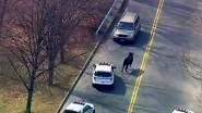 Stier ontsnapt uit slachthuis en doolt twee uur door straten in New Yorkse wijk