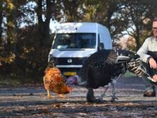 Geen drempels of flitsers: in Overberg gebruiken ze levende dieren tegen hardrijders