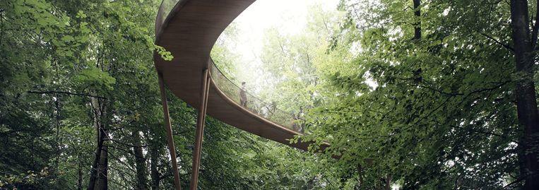 Het boomkruinpad in het Zoniënwoud wordt met haar 1,1 kilometer het langste van de hele Benelux.