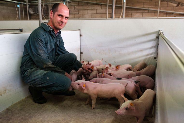 Varkensboer Piet Paesmans speelt muziek om zijn varkens gelukkiger te maken.
