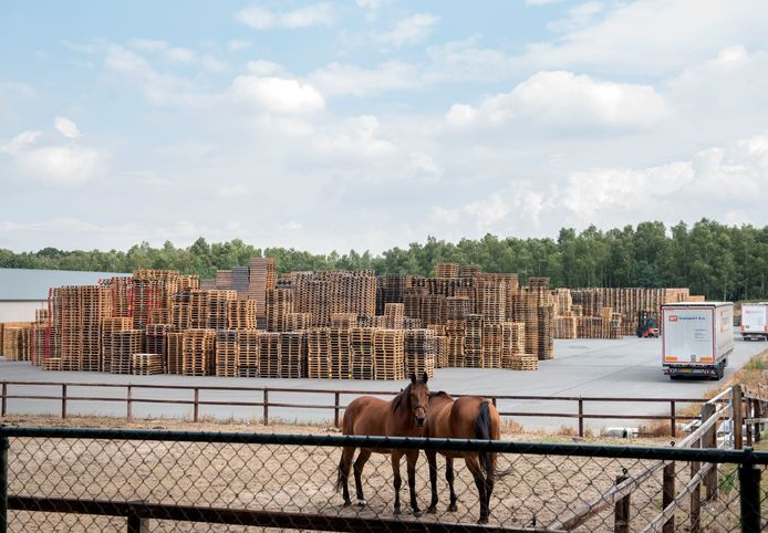 Pallets van Ten Hove aan de Haspel in Ermelo. De gemeente gaat onderzoeken of dit bedrijf en andere bedrijven aan de Haspel verplaatst kunnen worden naar een bedrijventerrein.