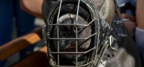 Amsterdam treedt op tegen gevaarlijke honden
