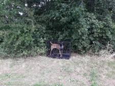 Verontwaardigde reacties op achterlaten Mechelse herder op carpoolplaats in Nieuwegein