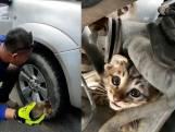Bijzondere reddingsactie: klein katje moet gered worden uit motor van auto