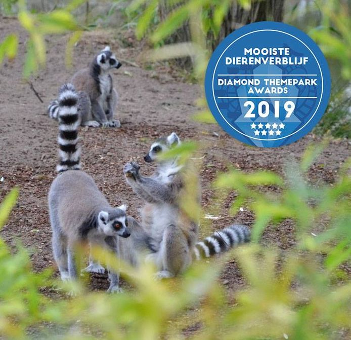 Safaripark Beekse Bergen wint drie Diamond Themepark Awards.