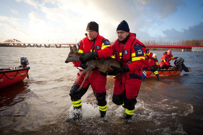 Reddingswerkers haalden een ree uit de IJssel.
