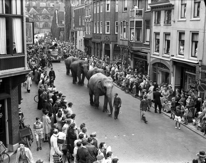 Met vier olifanten trekt Cirque Géant door de Korte Jansstraat in Utrecht om mensen naar de voorstelling te trekken. Dat lukte meer dan goed: er werden 600 kaarten te veel verkocht.
