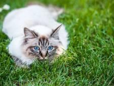 Samen kattenfilmpjes kijken op Wereld kattendag