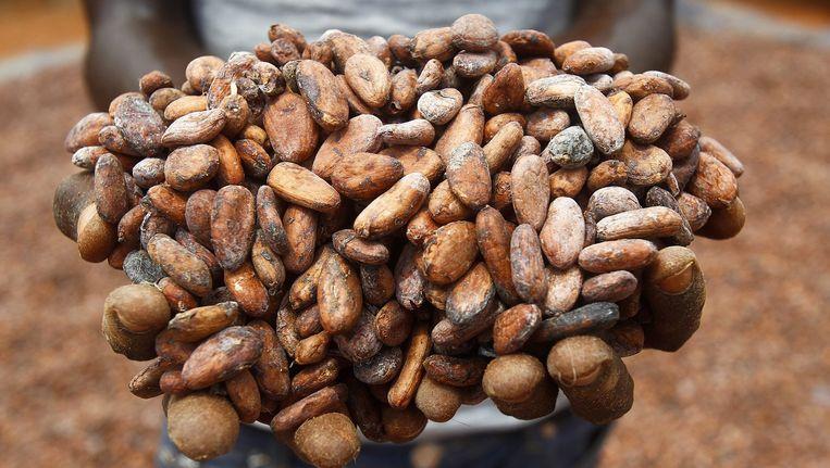 Cacaoboeren in Ivoorkust.