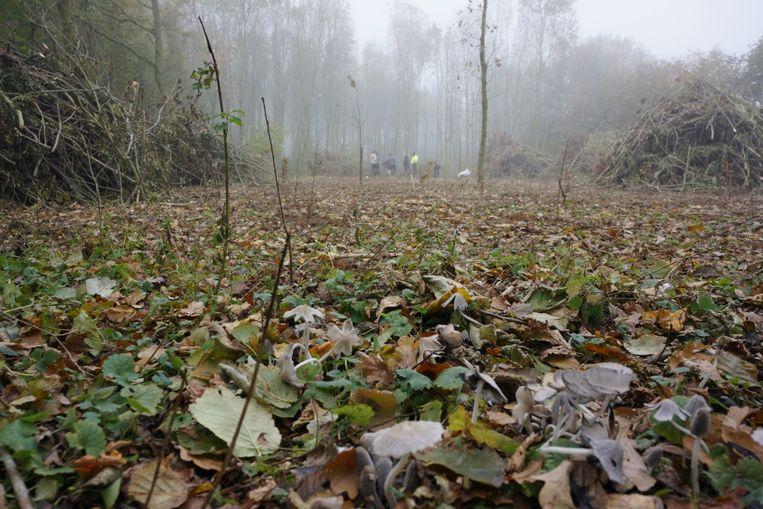 Vrijwilligers plantten zo'n 250 bomen in  het Doormansbos.