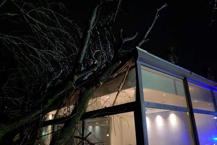 De boom belandde op de achterbouw van een woning langs de Kasteelstraat in Lede.