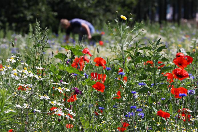 Een voorbeeld van een bloemrijk perceel.
