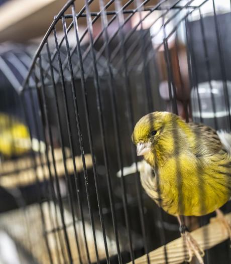 Achterhoekse vogelverenigingen slaan de handen ineen bij show in Olde Mölle