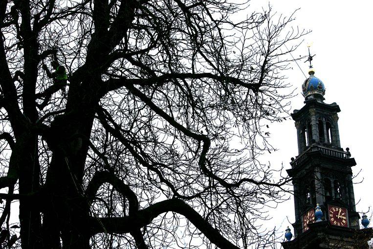 De Anne Frank boom toen hij nog op de originele plek stond, te zien vanuit het Achterhuis. Beeld Hollandse Hoogte /  ANP