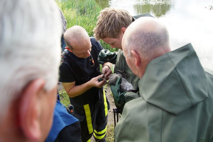 Brandweer redt meerkoet in Kaatsheuvel
