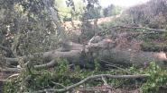 Natuurpunt dient klacht in tegen landbouwer die weide aan Berg Stene in Horebeke omvormt tot akker