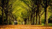 Nieuw bos met 2.400 inheemse bomen wordt aangeplant in Antwerpen