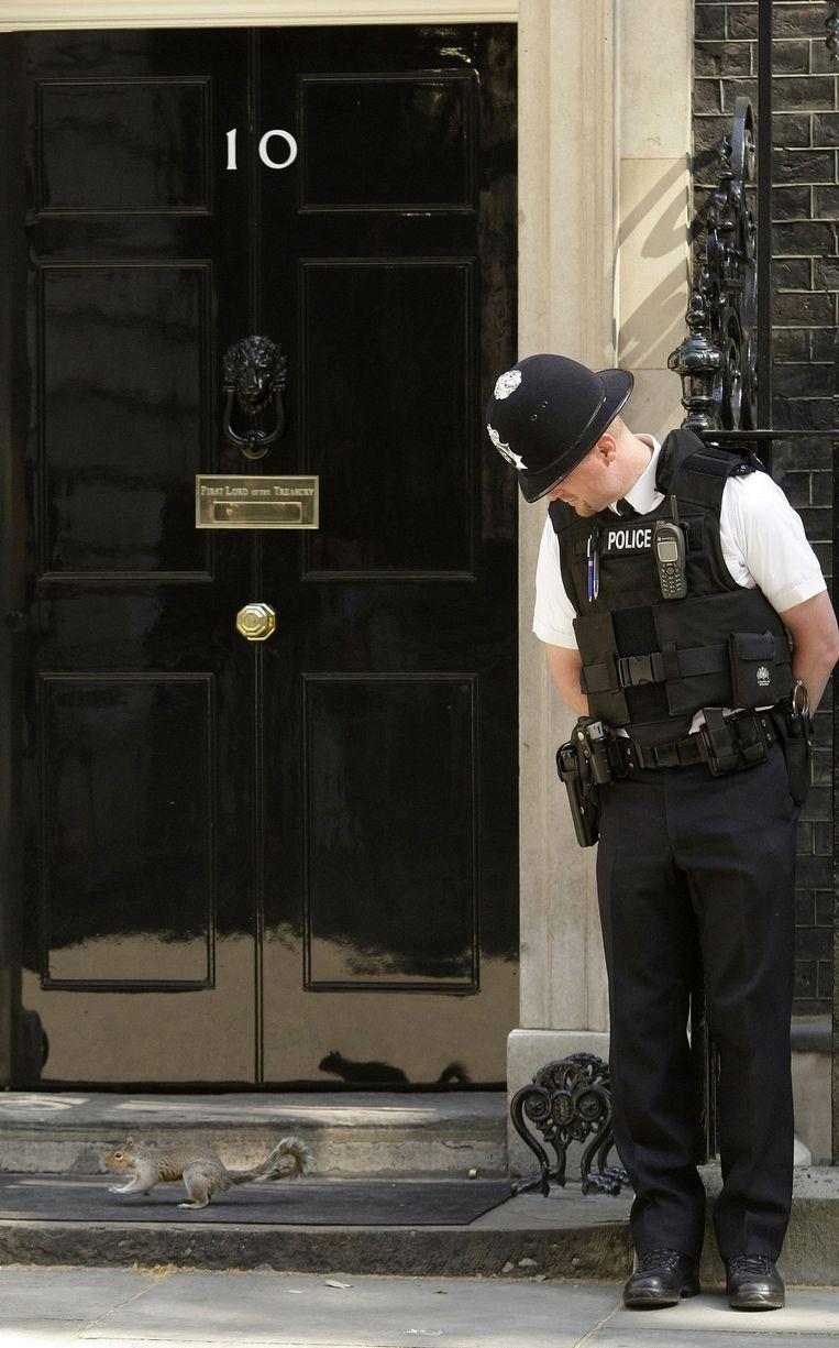 Een politieagent kijkt naar een eekhoorn die langs de ambtswoning van de Britse premier rent. Beeld afp