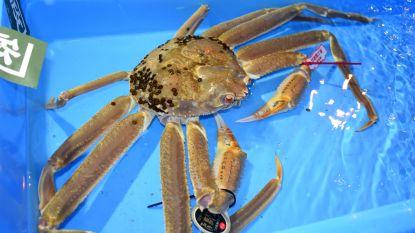 Duurste krab ter wereld verkocht voor meer dan 40.000 euro