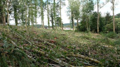 'Illegale' boomkap blijkt vergunning te hebben