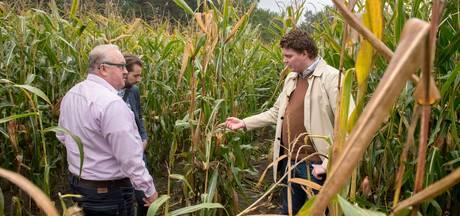 Veluwse boeren zijn wildschade zat, 'tegemoetkoming moet omhoog'