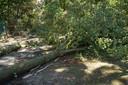 Boom dreigt op woning te vallen in Kaatsheuvel.
