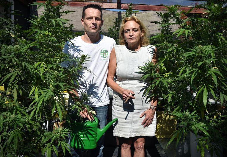 Marian Hutten en Serge de Bruijn van Midical Cannabis Supplies in hun achtertuin. Beeld Raymond Rutting
