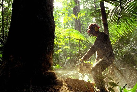 Een man zaagt een boom om in het Braziliaanse Amazonegbied.