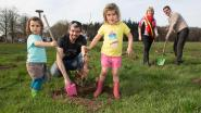 Eerste bomen voor nieuw bos Het Ockerhout