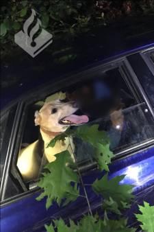 Zeven stropers aangehouden in De Rips, stroper rijdt in op auto gemeente
