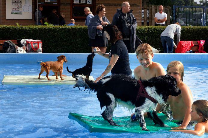 Foto ter illustratie: hondenzwemmen in Giessenburg.