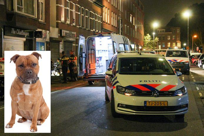 Hondenaanval in Rotterdam.