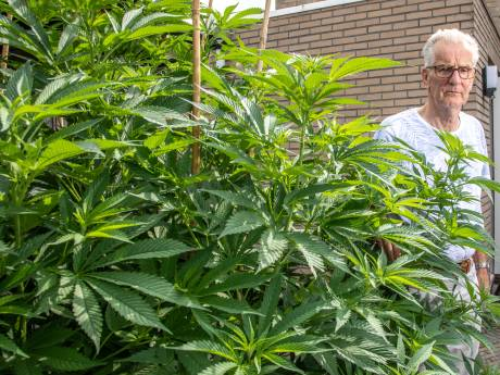 Opluchting bij Jan (73) uit Hasselt: politie verwijdert twee wietplanten nog niet