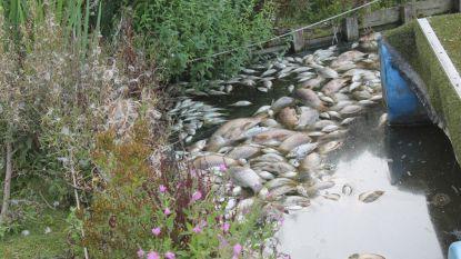 """Vier ton (!) vis sterft op onverklaarbare wijze in vijver: """"Tienduizenden euro's gaan in rook op"""""""