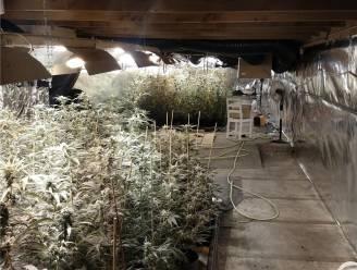 """Automatische cannabisplantages opgerold: """"Goed voor jaaropbrengst van 3,6 miljoen"""""""