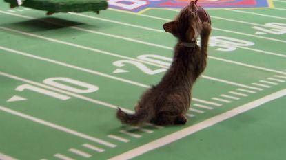 VIDEO. Zondag is het niet alleen de Super Bowl, ook de Kitten Bowl