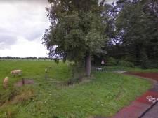 Kap én herplant van duizend bomen in Bronckhorst