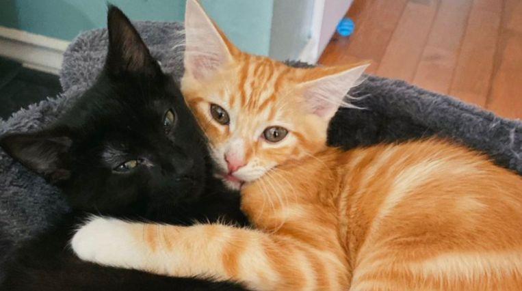 Thuiswerken met een kat is niet altijd een pretje: van toiletpapierverslinder tot collega #quarantainecats.