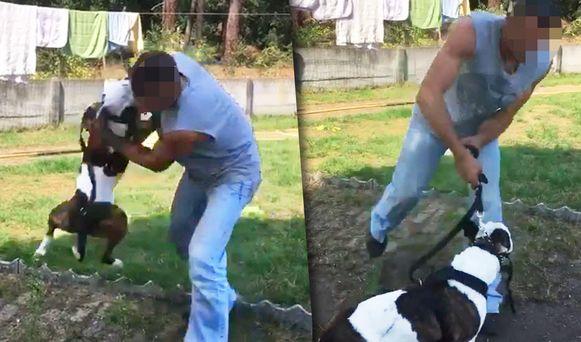 Vorig baasje P.N. gooit Chivas op zijn rug om hem vervolgens met zijn kop tegen de grond te slaan.