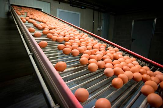 Eieren rollen van de band.